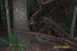 remains of track layer car at Tiger Mountain
